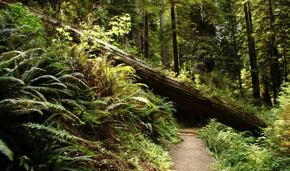 A tree log fallen on the path as a metaphor of an obstacle to a goal.